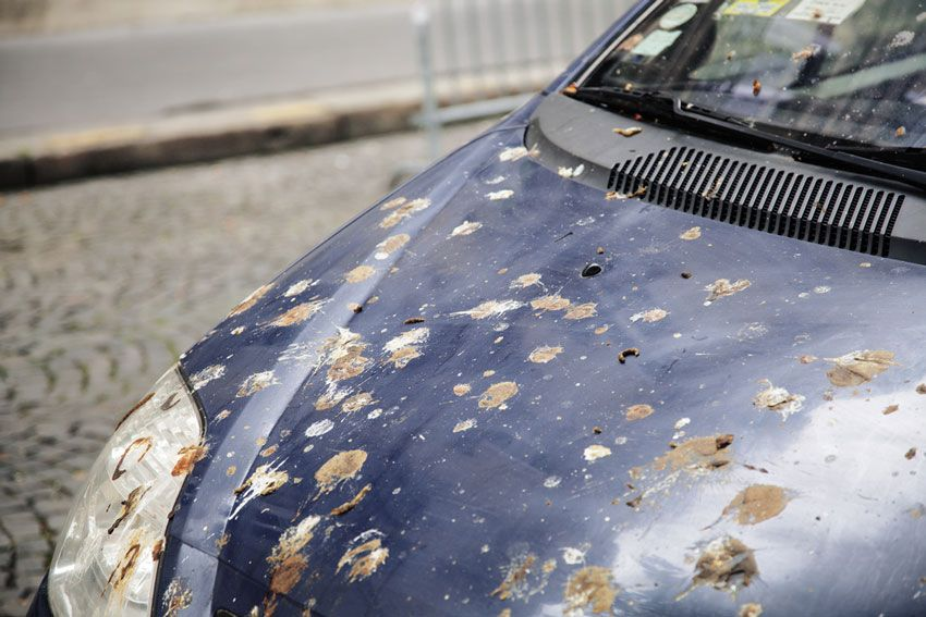 How to Remove Bird Poop from Your Car